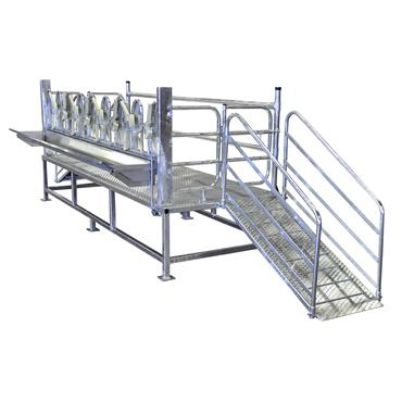 OVINE MILKING RAMP